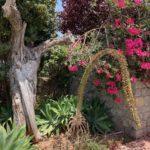 Hierbas Destilerias Ibiza Organic Garden